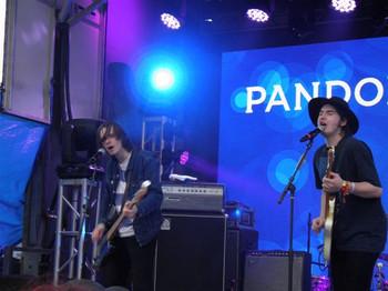 Palma_violets